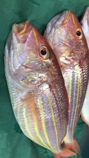 (0255)【超速鮮魚を冷凍】佐賀玄海漁協 イトヨリダイ