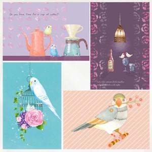 文鳥&インコ ポストカード