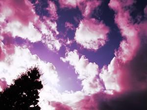 夕陽 (紫) 4