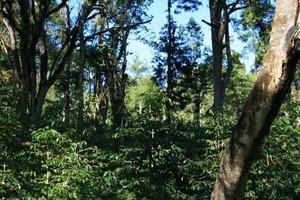エチオピア サワナ農園(シティ)natural 200g