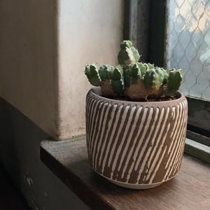 ユーフォルビア マカレンシス 陶器鉢(ブラウン×ホワイト)