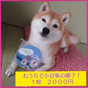 支援限定 小豆柴の郷 秋葉原店 DVD
