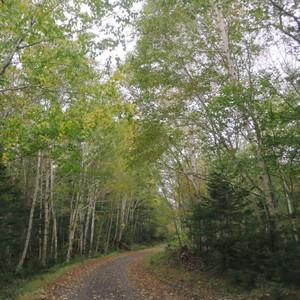mori森の香り(M)soywax100%の木芯キャンドル【ソイワックスキャンドル ソイキャンドル アロマキャンドル】