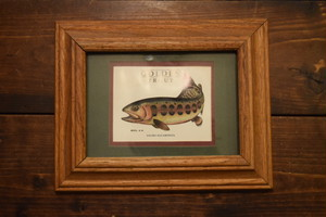 USED Golden Trout Ornament G0176