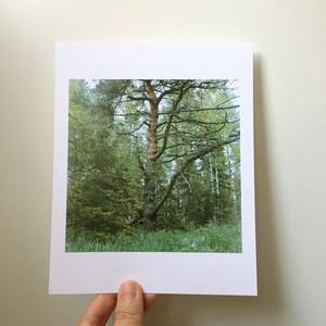 「木登り」大きいpostcard