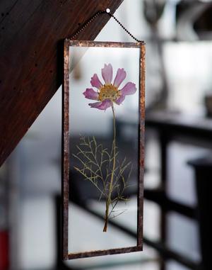 植物絵画:押し花『秋桜 紫・一輪』