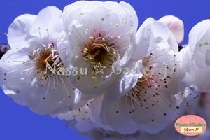 青葉の梅林2~Plum grove~⑨