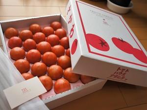 トマトハウスナカムラのフルーツトマトギフト(大)約1,600g☆ラッピング・熨斗対応☆贈答用 高糖度トマト 出産祝い 結婚祝い 誕生日祝い 還暦祝い 内祝 お歳暮