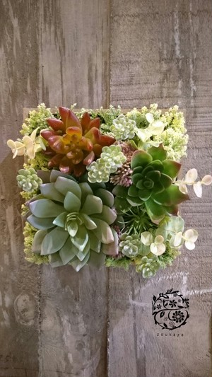 光触媒で空気を綺麗に♪多肉植物のナチュラルインテリアグリーン【ウォールガーデン】壁掛けフラワーアレンジメント