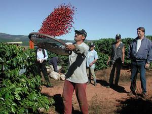 ブラジル  カルメリート農園 Pulped Natural (中煎り) 250g