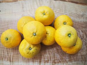 初夏の柑橘3種BOX【3㎏箱入】