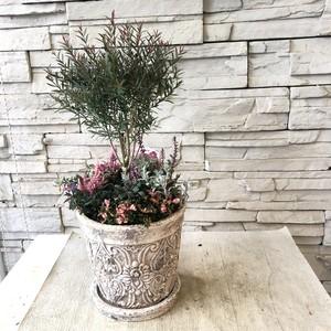 メラレウカ トピアリー ピンクのギャザリング鉢植え