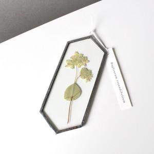 ブプレリウム / A piece of nature 六角 小