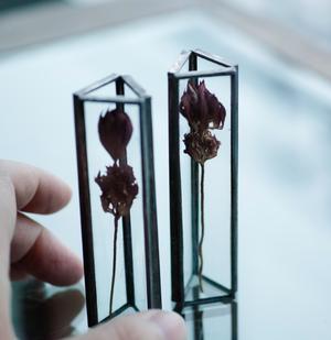 〚お在庫2点〛 植物標本 小:ドライフラワー『アストランティア』
