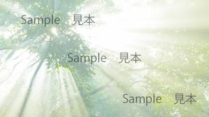 写真素材Web用 光流れ込む森