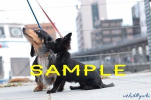 【動物】犬 ポストカード
