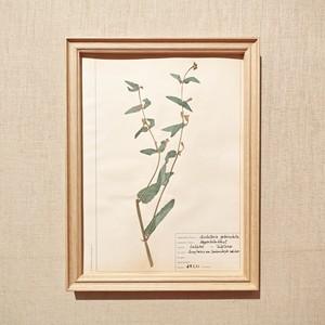 植物標本フレーム 1960 ドイツビンテージ 19MAR-VSHF08