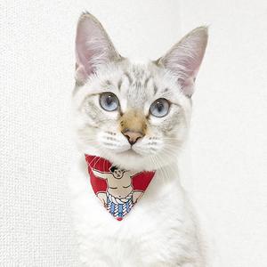【力士柄】猫用バンダナ風首輪/選べるセーフティバックル※NyAERA掲載商品