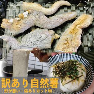 【送料無料】訳ありたっぷり自然薯約1kg(カット物)