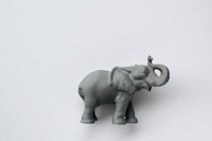 ゾウさんだぞう。