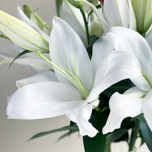 LY Lily Selection ザンベジ 5本セット (JA北魚沼)