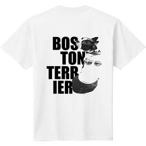 Boston Terrier (ボストンテリア)impact B