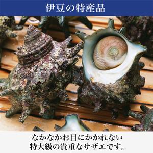 【カターラ】活けS級サザエ