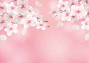 【A0】桜1
