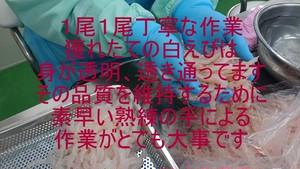 (0299)【100gパックになって登場!】富山湾産白えび刺身(冷凍) ミシュラン星付店御用達 最高級手剥き品