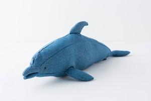 ハンドウイルカ Bottlenose Dolphin