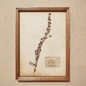 植物標本 フレーム 1929 vintage 18MAR-VSH07