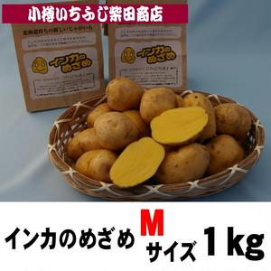 1㎏袋 インカのめざめ Mサイズ 北海道十勝産