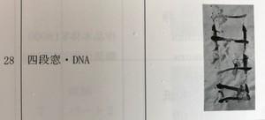 木原光威作品「四段窓・DNA」カタログ28