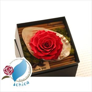 【母の日限定】Shell Flower Box Arrangement