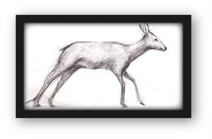 彫刻家・中里勇太ドローイング・鹿