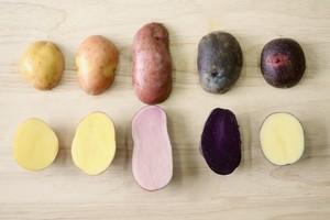 東京西洋野菜研究会のカラフルポテト5種類
