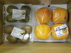 秋の果物詰め合わせ(柿・キウイフルーツ)
