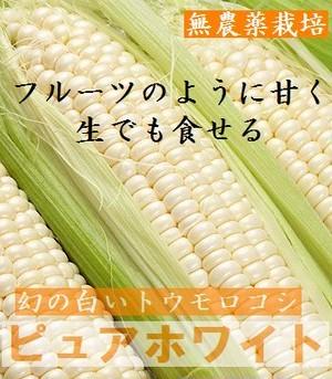 【販売終了】ピュアホワイト 2Lサイズ 10本(約4kg)