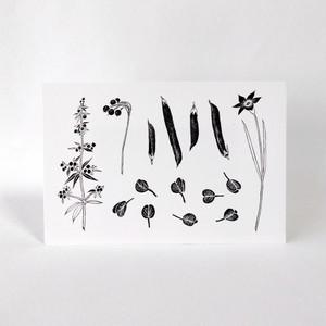 庭の植物(春夏)のポストカード