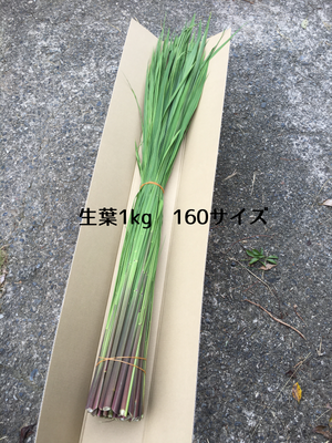 原種まこもの生葉 1kg (長いまま)