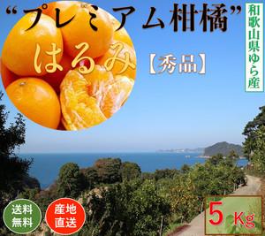 【早期予約販売】和歌山県由良町産 柑橘類【はるみ】【秀品】5kg /箱【送料無料】
