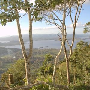 ニカラグア サンホセ農園 ジャバニカ 250g(中煎り)
