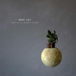 moon pot(ガジュマル)ハンギングタイプ