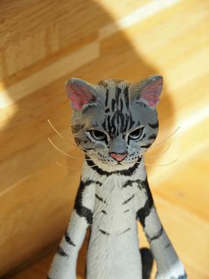The Cat 200% 【アメリカンショートヘヤー】【送料無料】