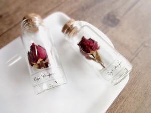 植物標本 Botanical Collection■No.R-12 バラ ファンファール