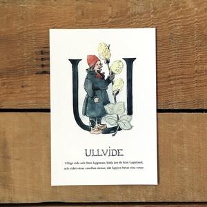 ポストカード「ウーリーウィロー@ULLVIDE(王子たちの花文字 - 21)」