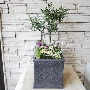 香川県産オリーブ【souju】の株元寄せ植え