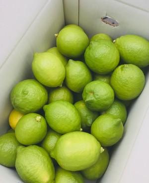 グリーンレモン 5kg     (約30〜35個入り)