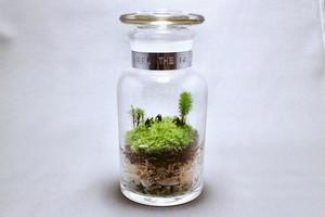 苔のテラリウム 森林 moss monkeys 薬瓶250ml