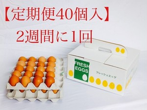 【定期便2週間に1回】ふみちゃん家のたまご40個入